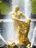 Samson Fountain Peterhof Royaltyfri Fotografi