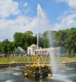 Samson fountain in Peterhof. The famous Samson fountain in Peterhof, St. Petersburg, Russia stock image
