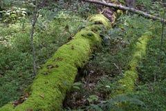 Samt bedeckte Logonwaldboden lizenzfreies stockfoto