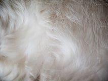 Samtartige Wolle eines Hundehintergrundes Stockbild