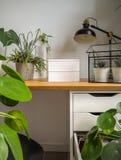 Samtida och ljust studiekontor med en stads- djungelkänsla tack vare talrika gröna växter royaltyfria bilder