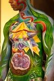 samui картины тела стоковые изображения rf