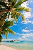samui пляжа Стоковые Изображения