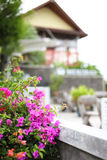 Samui island of Bougainvillea. Unforgettable people, a very beautiful place Royalty Free Stock Photography