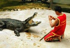 Samut Prakan, Thailand: Crocodile Show Royalty Free Stock Image