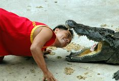 Samut Prakan, Thailand: Man with Crocodile. Thai man tempts fate as he places his head inside a crocodile's menacing mouth during a performance at the Samut Royalty Free Stock Photos