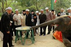 Samut Prakan Thailand: Muselmaner som håller ögonen på elefanten att visa arkivfoton