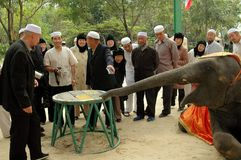 Samut Prakan, Thailand: Muslims Watching Elephant Show. Samut Prakan, Thailand:  A group of Indonesian Muslims, the men wearing traditional white hats, watch an Stock Photos