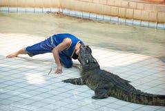 SAMUTPRAKARN, TAJLANDIA: Krokodyla przedstawienie, mężczyzna niebezpieczeństwo przy krokodyla zoo i ekscytować i Obrazy Stock
