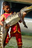 `SAMUTPRAKARN`,THAILAND - 25 DECEMBER 2016: It is crocodile show at farm on 25 December 2016 in Samutprakarn,Thailand. Royalty Free Stock Images