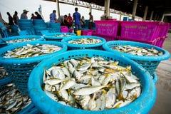 Samutsakorn Thailand - september8,2018: de arbeider die grootte en soort vissen verzamelt ving van visserijboot bij mahachai royalty-vrije stock fotografie