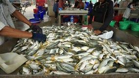 Samutsakorn Thailand - september8,2018: de niet geïdentificeerde arbeider die grootte en soort vissen verzamelen ving van visseri stock video