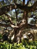 San Antonio fotografia de stock royalty free