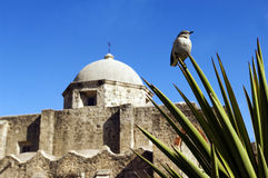 San Antonio missions Stock Images