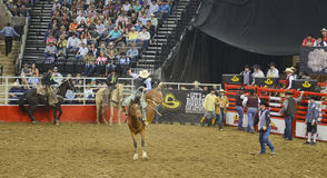 San Antonio Rodeo Stock Photo