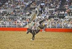 San Antonio Rodeo. Man on a horse in the San Antonio rodeo,  February 2014 Royalty Free Stock Photo