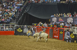 San Antonio Rodeo Royalty Free Stock Photo