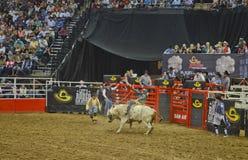 San Antonio Rodeo. Man on a bull in the San Antonio rodeo,  February 2014 Royalty Free Stock Photo