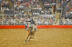 San Antonio Rodeo. Man on a horse in the San Antonio rodeo,  February 2014 Stock Photos