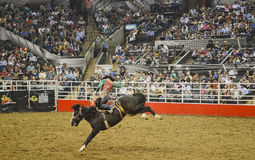 San Antonio Rodeo. Man on a horse in the San Antonio rodeo,  February 2014 Stock Images