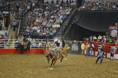 San Antonio Rodeo. Man on a horse in the San Antonio rodeo,  February 2014 Stock Photography