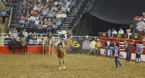 San Antonio Rodeo. Man on a horse in the San Antonio rodeo,  February 2014 Stock Image
