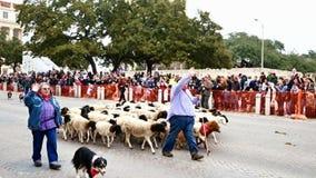 San Antonio, Texas de V.S. - 3 Februari 2018: De schapen van de de hulp sherherd kudde van schapenhonden voorbij Alamo stock footage