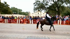San Antonio, Texas EUA - 3 de fevereiro de 2018: O cavalo e o cavaleiro de Paso Fino vão após o Alamo histórico durante a parada filme