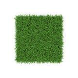 San Augustine Warm Season Grass su bianco illustrazione 3D Immagini Stock Libere da Diritti