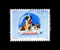 San Bernard Dog (familiaris) di canis lupus, serie dei globi della neve, c Immagini Stock