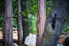 SAN Bernardino Forest Στοκ φωτογραφίες με δικαίωμα ελεύθερης χρήσης