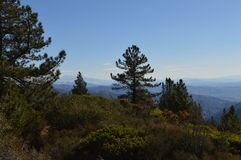 San Bernardino Mountains. San Bernardino Mountain View with pine trees Royalty Free Stock Photos