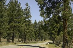 San Bernardino Mountains in Southern California royalty free stock images