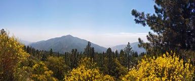 San Bernardino National Forest Fotografia Stock Libera da Diritti