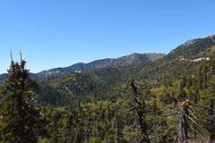 San Bernardino National Forest Image stock