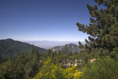 San Bernardino National Forest, Ca,USA near Big Bear Lake Stock Image