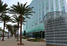 San Diego, California. Palm treea on street of San Diego, California palm stock image