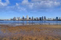 San Diego, California skyline from Coronado Island. The San Diego, California skyline from Coronado Island royalty free stock photo