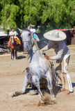 San Diego - Cinco De Mayo Royalty Free Stock Image