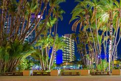 San Diego City Palm Trees Photographie stock