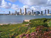 San Diego from Coronado. Downtown San Diego from Coronado with flowers royalty free stock photos
