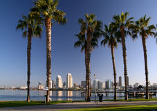 San Diego and Coronado Palm Trees Royalty Free Stock Photography