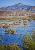 San Diego County Wetlands, California Royalty Free Stock Photos