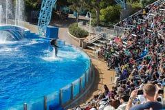 SAN DIEGO, de V.S. - 15 NOVEMBER, 2015 - de dolfijn toont op zee Wereld Stock Afbeeldingen