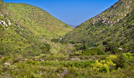 San Diego Gorge, California. The rolling hills formed by a gorge, frequented by many hikers and walkers, lush with green springtime plants, after a wet winter Stock Image