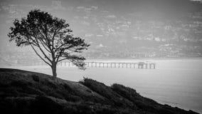 San Diego i drzewo Zdjęcia Royalty Free