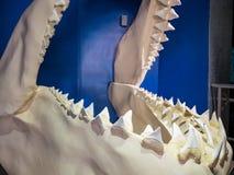 Hugh shark jaw bone in the famous SeaWorld stock photography
