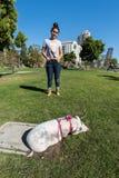 SAN DIEGO, los E.E.U.U. - 14 de noviembre de 2015 - gente que camina un cerdo rosado del bebé en San Diego Harnor Drive Foto de archivo