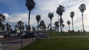 San Diego Palm Trees Lizenzfreies Stockbild
