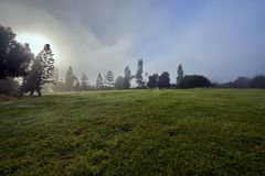 San Diego`s famous Balboa park and its beautiful vegetation during the morning haze stock photos